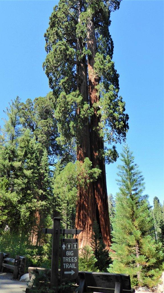 Sequoia-National-Park-075.JPG