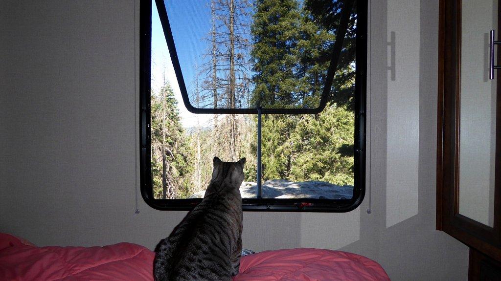 Sequoia-National-Park-026.JPG