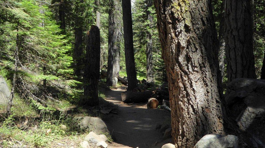 Sequoia-National-Park-040.JPG