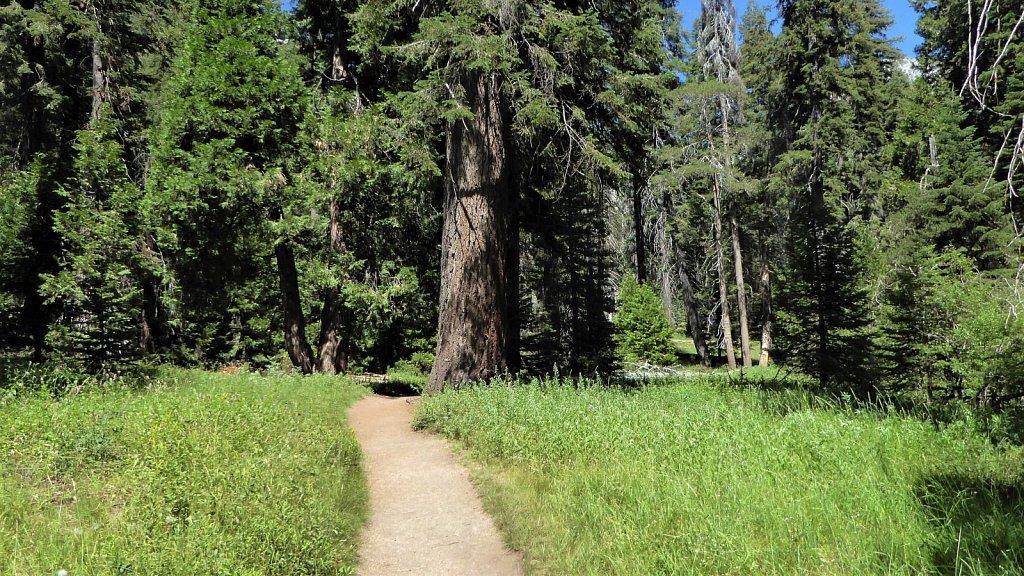 Sequoia-National-Park-041.JPG