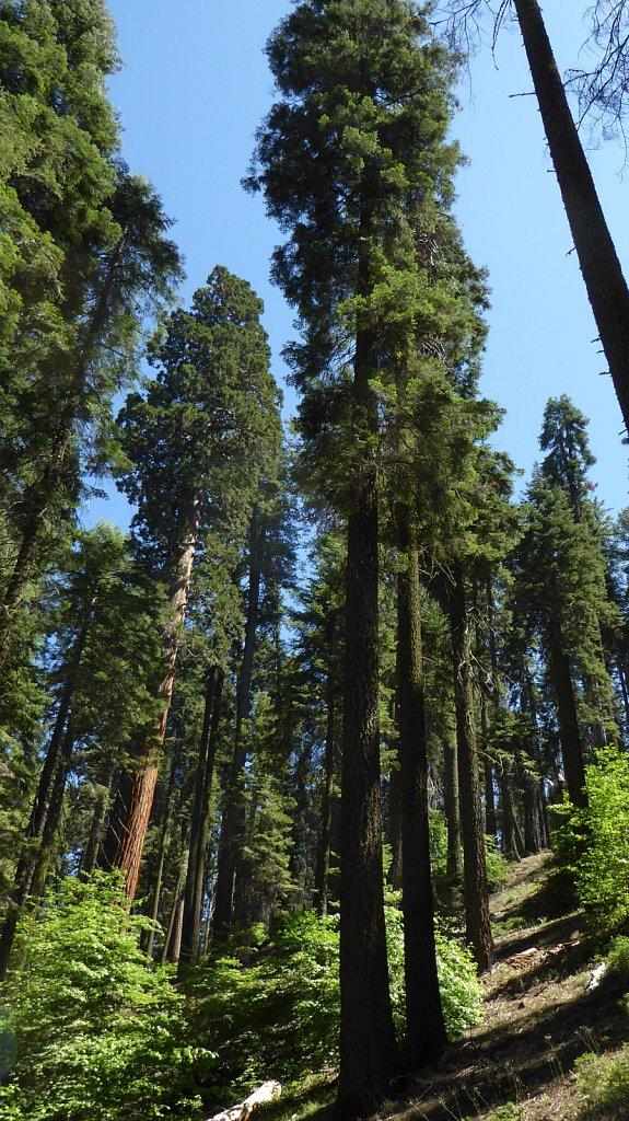 Sequoia-National-Park-070.JPG