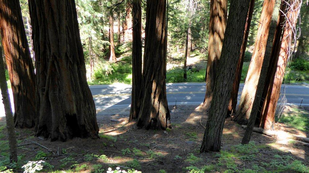 Sequoia-National-Park-071.JPG