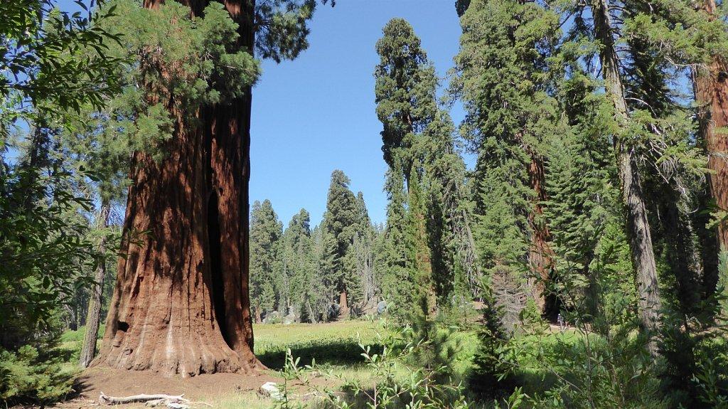 Sequoia-National-Park-076.JPG
