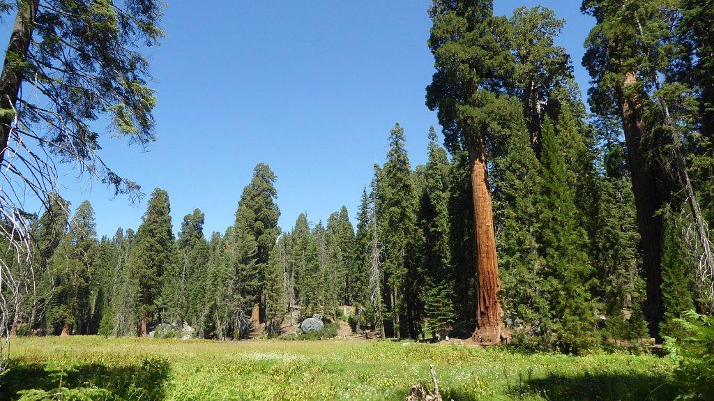 Sequoia-National-Park-079.JPG