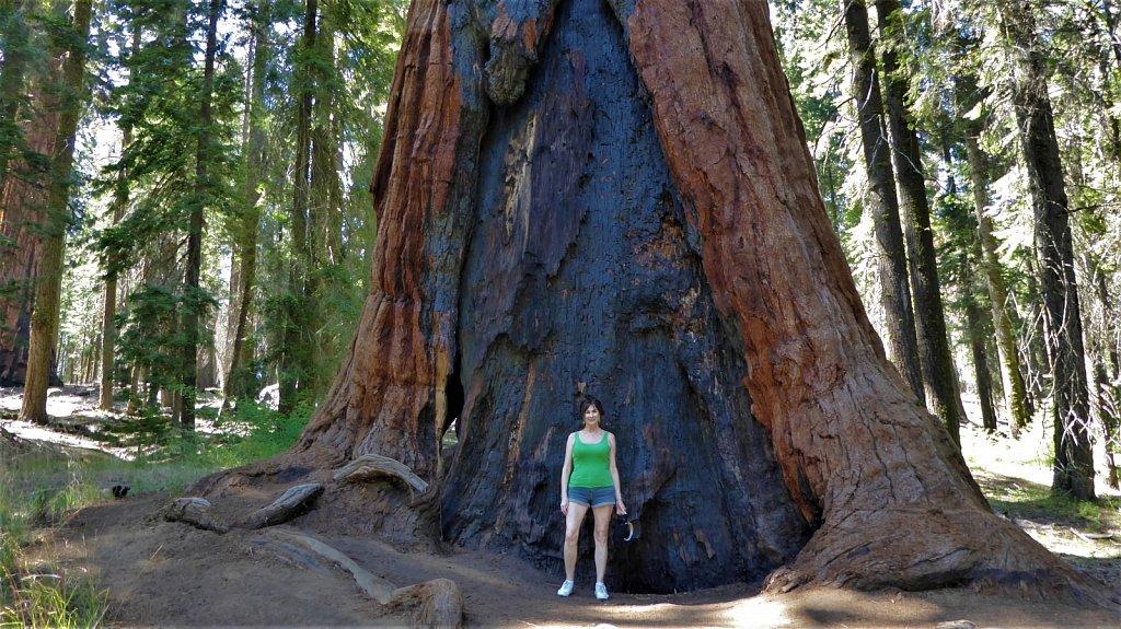 Sequoia-National-Park-088.JPG